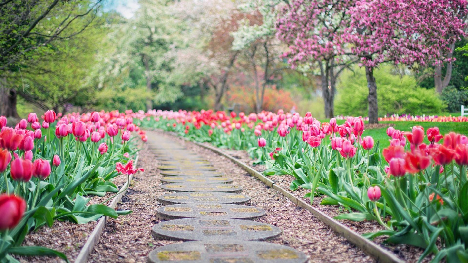 Comment mettre en valeur l'allée de votre jardin ?